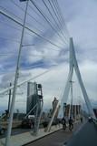 Rotterdam pont Erasmus - 172222590