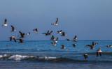Oiseau - 172240722