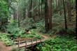 Bridge to Redwood Forest. Purisima Creek Redwoods Open Space Preserve, Woodside, San Mateo County, California, USA.