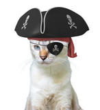 Funny Animal Costume Of A Cat Pirate Captain Wearing A Tricorn Hat And Eyepatch  Skulls And Crossbones    Wall Sticker