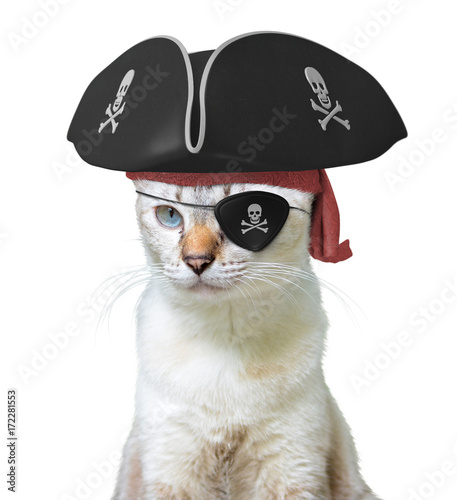 Aluminium Kat Funny animal costume of a cat pirate captain wearing a tricorn hat and eyepatch with skulls and crossbones, isolated on a white background