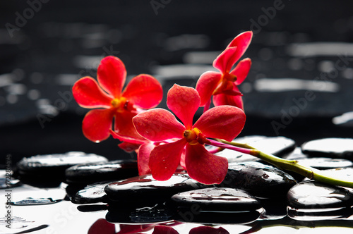 Poster Spa Red branch orchid with black stones on wet pebbles