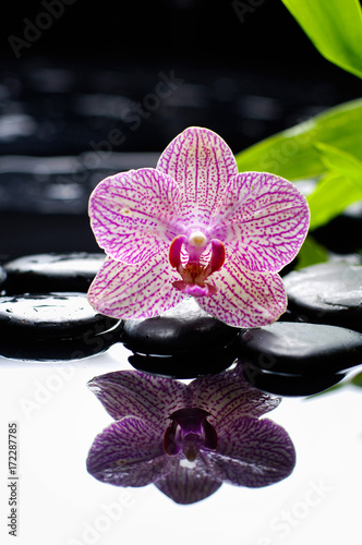 Keuken foto achterwand Spa Beautiful orchid and green bamboo leaf with therapy stones