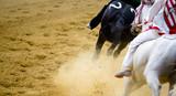 Palio di Asti con corsa dei cavalli al galoppo - 172334198