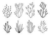algae vector set. hand drawings isolated
