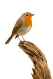Beautiful small bird - 172345713