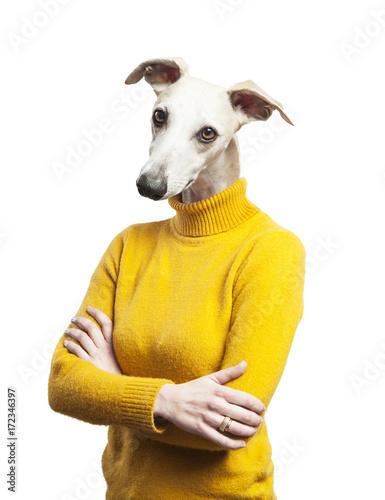 anthropomorphic dog portrait. woman body with grayhound's head