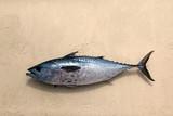 Freshly caught tuna in the sand. Zanzibar, Tanzania - 172363129