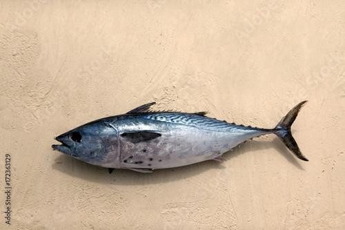 Keuken foto achterwand Zanzibar Freshly caught tuna in the sand. Zanzibar, Tanzania