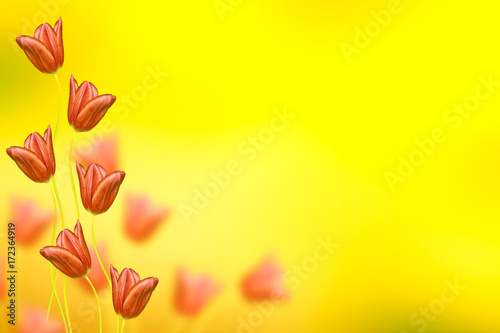 Poster Zwavel geel Bright and colorful flowers tulips