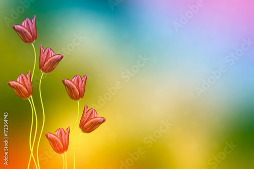 Spoed canvasdoek 2cm dik Meloen Bright and colorful flowers tulips
