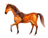 Horse, watercolor painting - 172391509