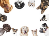 verschiedene Hundeköpfe Kreis Anordnung