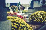 chrysanthemum flowers in cemetery