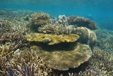 Corals underwater on a shallow reef in the lagoon of Grande Terre island in New Caledonia, south Pacific ocean, Oceania