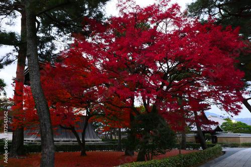 Fotobehang Bordeaux Fall of ancient capital of Japan