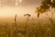 Misty summer end background,  sunrise dawn and dewy grass with spider webs