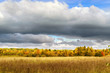 Autumn landscape. Field and forest are yellow and gray, low clouds