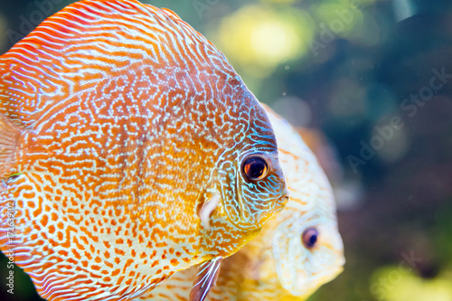 Picture of beautiful exotic fish swimming underwater Poster