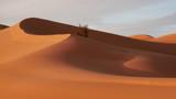 Dune di sabbia nel deserto Sahara tunisino - 172653327