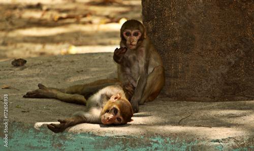 Fridge magnet Monkey