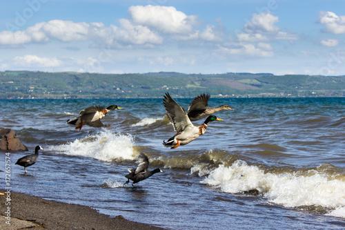 Fotobehang Uccelli in volo sopra il lago
