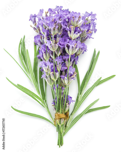 Papiers peints Lavande Bunch of lavandula or lavender flowers isolated on white background.