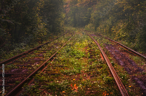 Path to autumn. Fall landscape with railways in deep forest Plakat
