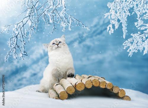 Siberian kitten in snowy forest Poster