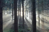 Wald - 172676934
