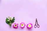 Floral pattern. Make bouquet concept. Pink flowers near sciccors on purple background top view copyspace - 172729163