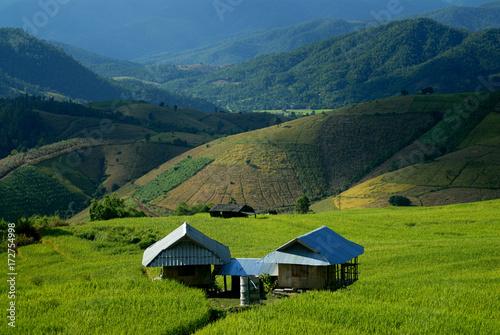Foto op Plexiglas Rijstvelden Green terraced rice field in Pa Pong Pieng. Chiang Mai ,Thailand.