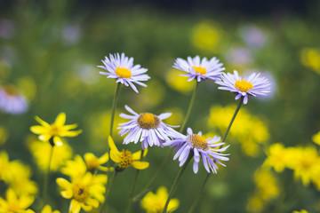 mountain flowers british columbia