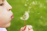 Child and Dandelion - 172775910