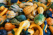 pile of gourd in autumn harvest season