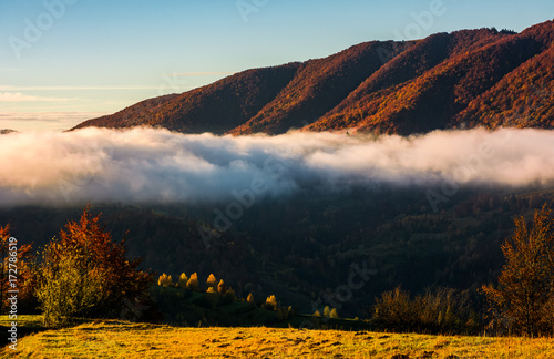 Foto op Aluminium Chocoladebruin cloud rising above the forest in mountains, beautiful autumnal scenery at sunrise