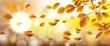 Autumn Beech Foliage Fall Sunlights Wind Sunbeam