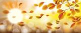 Autumn Beech Foliage Fall Sunlights Wind Sunbeam - 172795377