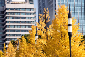 Street lamp with yellow tree on background of modern office buildings in Park, Tokyo, Japan.Autumn in a garden in the center of Tokyo