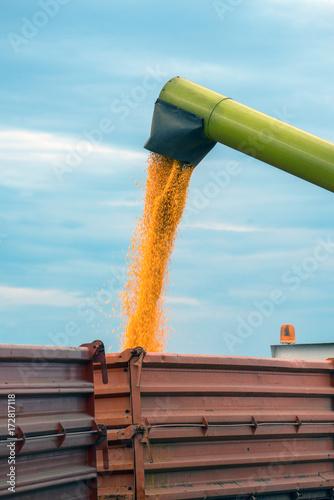 Fotobehang Trekker Corn maize harvest, combine harvester unloading grains