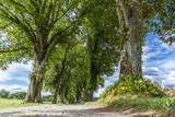 Feldweg in Bayern gesäumt von einer Lindenallee - 172824938