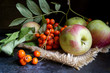 Apples and Rowan berries on a black background. Autumn still-life.