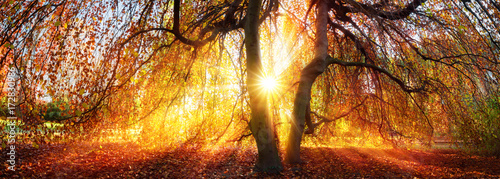 Papiers peints Orange eclat Goldene Sonnenstrahlen im Herbst