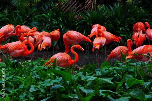 Plakat Flamingo bird in nature