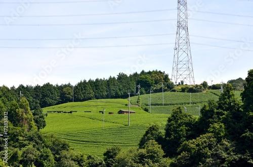 Foto op Plexiglas Kyoto 京都 宇治茶の茶畑