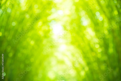 Fotobehang Bamboe abstract blur bamboo leaves with boken for background