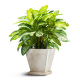 Green houseplant isolated - 172840715