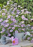 massif de fleurs d'aster au dessus d'une table  en bois  - 172851532