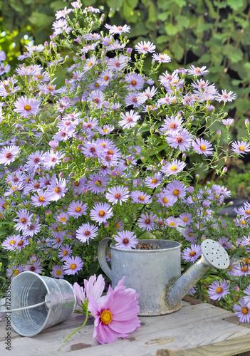 Fridge magnet massif de fleurs d'aster au dessus d'une table  en bois