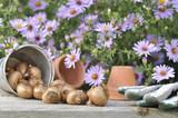 bulbes de fleurs sur table de jardin devant fleurs d'aster